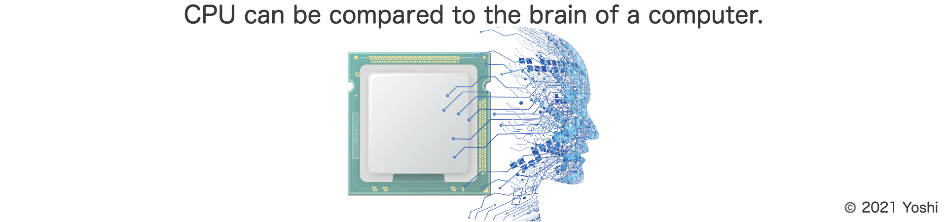 CPU can be compared to the brain of a computer